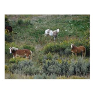 Pferdetrio Postkarte