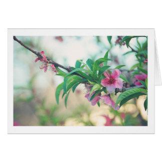 Pfirsich-Blüte Mitteilungskarte