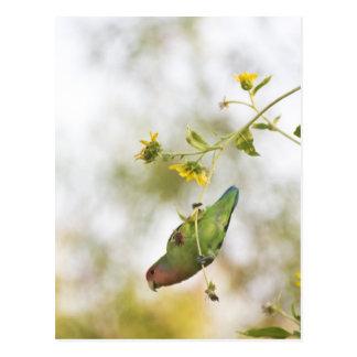 Pfirsich stellte Liebevogel gegenüber Postkarte