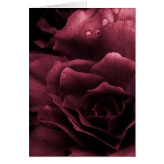 Pflaumen-Rot nah oben von einer doppelten Begonie Karte