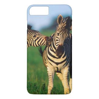 Pflegende Paare Ebenenzebra-(EquusQuagga), Tala iPhone 8 Plus/7 Plus Hülle