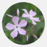 Phlox rose autocollants ronds