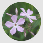 Phlox rose sticker rond