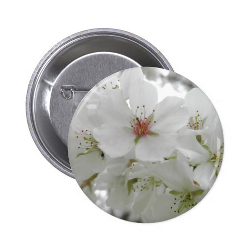 Photo blanche de fleurs de cerisier badge avec épingle