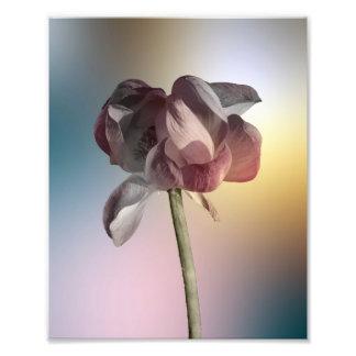 Photo d'arc-en-ciel de fleur de Lotus