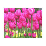 Photo florale de tulipes roses toile tendue