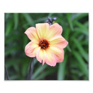 Photo jaune de fleur