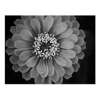 Photo noire et blanche de fleur carte postale