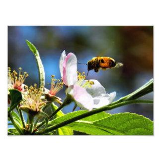 Photographie d'abeille et de fleur blanche