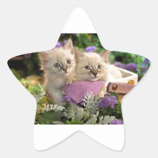 Piaulement espiègle de chatons hors d'un panier de sticker étoile