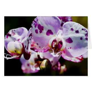 Pickelige Orchidee Karte