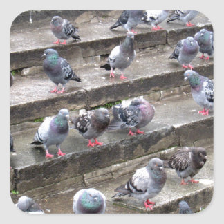 Pigeons Sticker Carré
