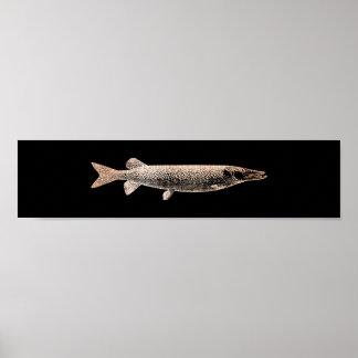 Pike-Jack-Fische erröten metallisches rosa Poster