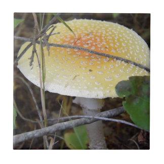 Pilz Kleine Quadratische Fliese