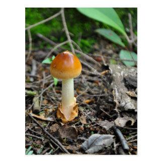 Pilz-Schönheit des verfaßten Fadens Postkarte