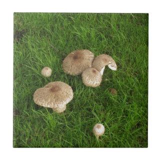 Pilze Kleine Quadratische Fliese