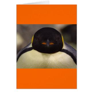 Pinguin Karte