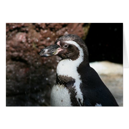 Pinguin-Karte Grußkarte