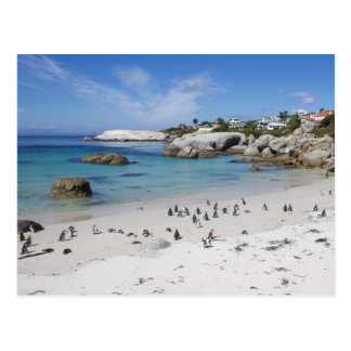 Pinguin-Kolonie auf Flussstein-Strand, Südafrika, Postkarte