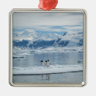 Pinguine auf einem Eisberg Quadratisches Silberfarbenes Ornament