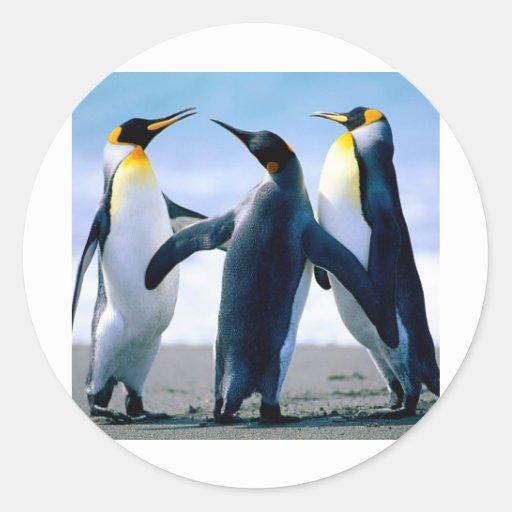 Pinguine Foto Maravilhosa Aufkleber