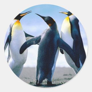 Pinguine Foto Maravilhosa Runder Aufkleber