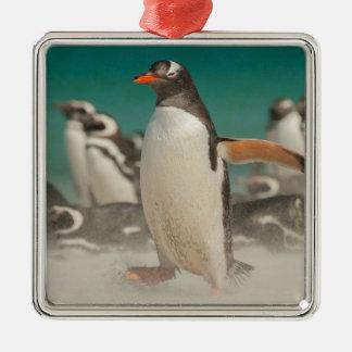 Pinguingruppe auf Strand, Falkland Quadratisches Silberfarbenes Ornament