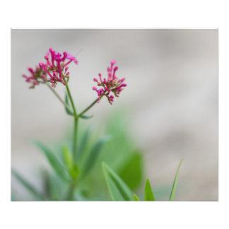 pink flower. photo d'art