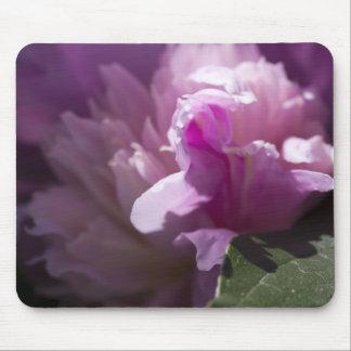 pink-rose-2012-05-20 tapis de souris