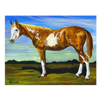 Pinto-/Farben-Pferdepostkarte Postkarte