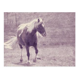 Pinto-Pony Postkarte