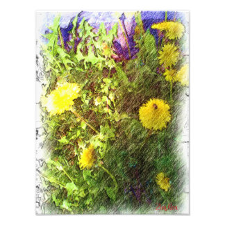 Pissenlit de fleur photo