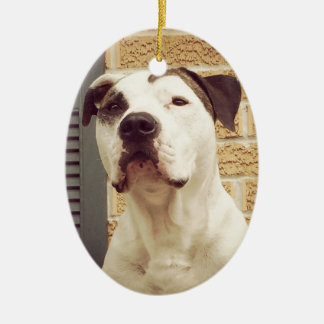 Pitbull-förmiger Knochen Ovales Keramik Ornament