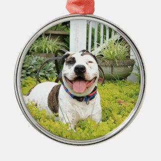 Pitbull-förmiger Knochen Rundes Silberfarbenes Ornament