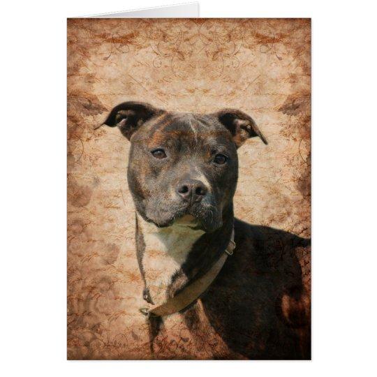 Pitbull Terrier Karte