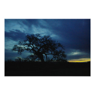 Plakat der Eiche am Sonnenuntergang