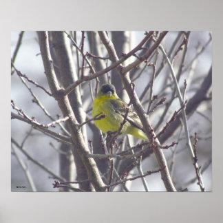 Plakat - gelber Vogel in den Niederlassungen