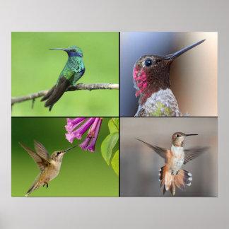 Plakat-Kolibri-Leben Poster