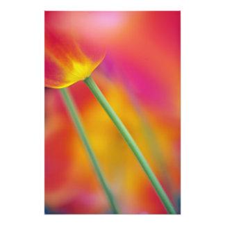 Plan rapproché du dessous de la fleur de tulipe, photo d'art