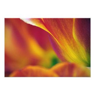Plan rapproché du dessous de la fleur de tulipe, photos