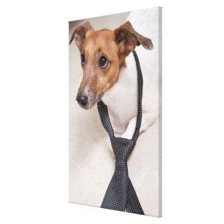 Plan rapproché d'un chien mettant sur une cravate toiles tendues