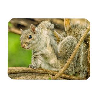 Plan rapproché d'une éraflure d'écureuil de gris magnet en vinyle