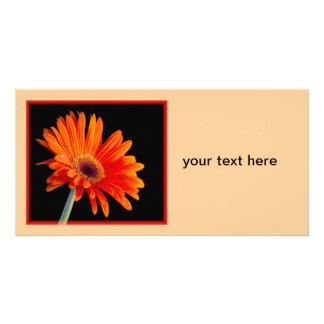Plan rapproché Photocard de fleur Photocarte