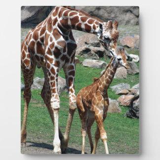 Plaque Photo L'animal de safari de l'Afrique de girafe