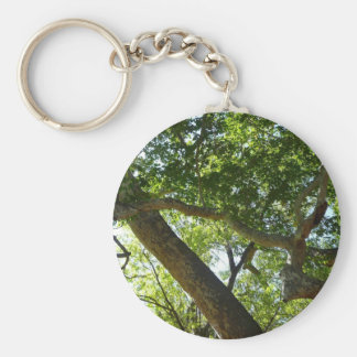 Platane-Baum-Grün-Natur-Fotografie Schlüsselanhänger