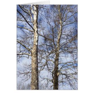Platane-Bäume in einem Winter-Himmel --- Karte