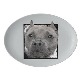 Plateau de chien de Pitbull