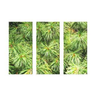Platten-Leinwand-Dekoration der Kiefern-3 Leinwanddruck