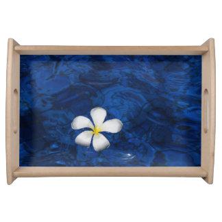 Plumeria-weiße Blumen-mit Blumengemustertes Serviertabletts