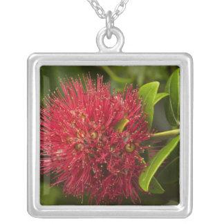 Pohutukawa Blume, Dunedin Versilberte Kette